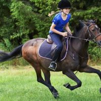 HORSE SADLE