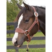 Weaver Leather Stacy Westfall Plain Nose Bronc Halter Average Horse