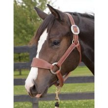 Weaver Leather Stacy Westfall Plain Nose Bronc Halter Average Horse